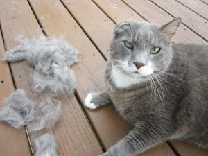 Cats need to be brushed. Barfing up hairballs is not fun.