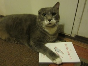 The cat who writes is reading The In-Between by Jeff Goins