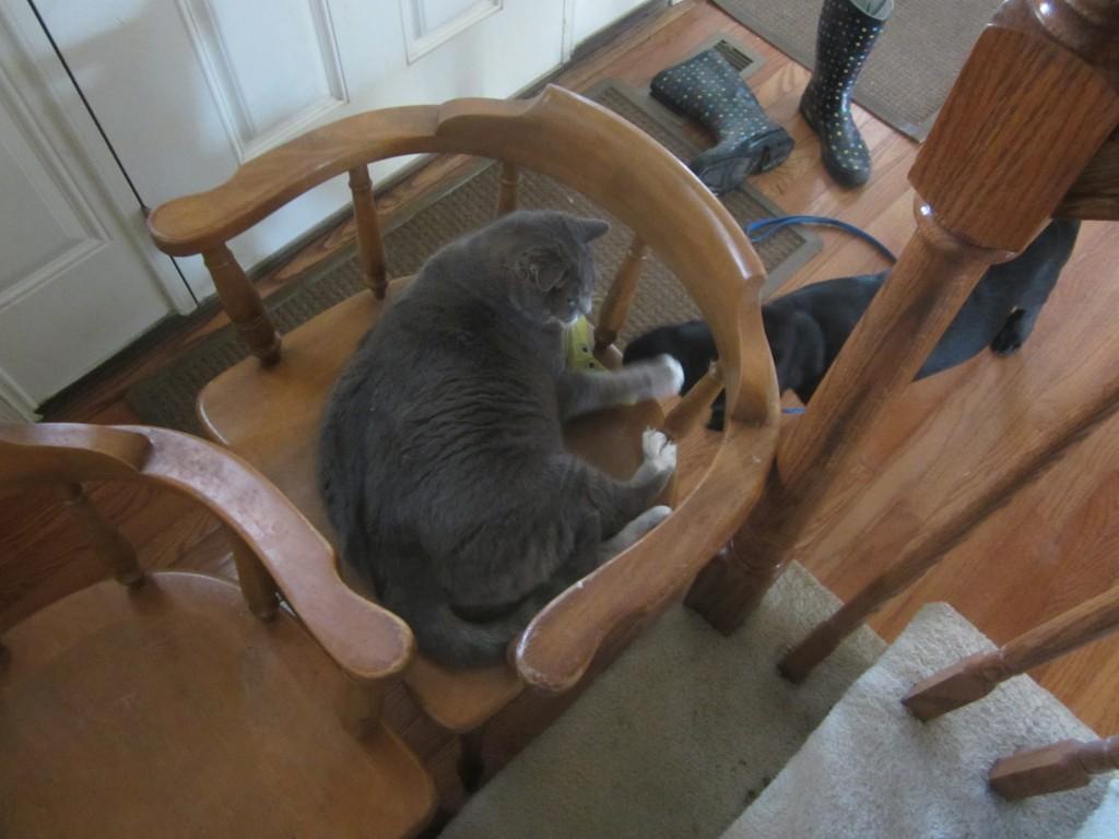 The best puppy gate, a cat in a chair
