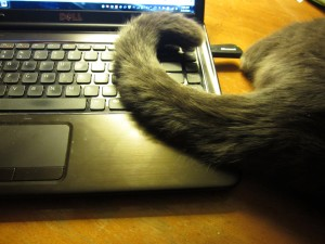 I am a cat trying to learn how to type