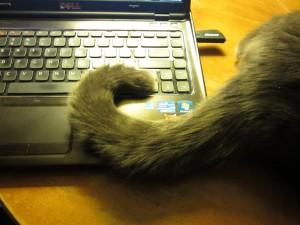 cat types to type