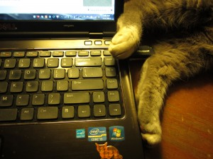 Typing with my hind legs