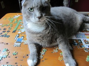 The best place to take a nap in on a puzzle