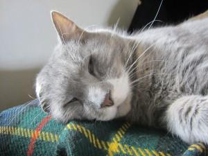 Take a cat nap today