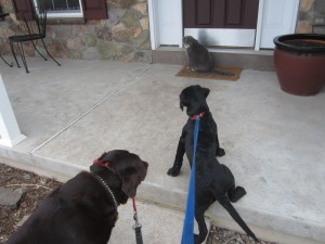Dogs have to be taken for walks. Cats walk themselves.